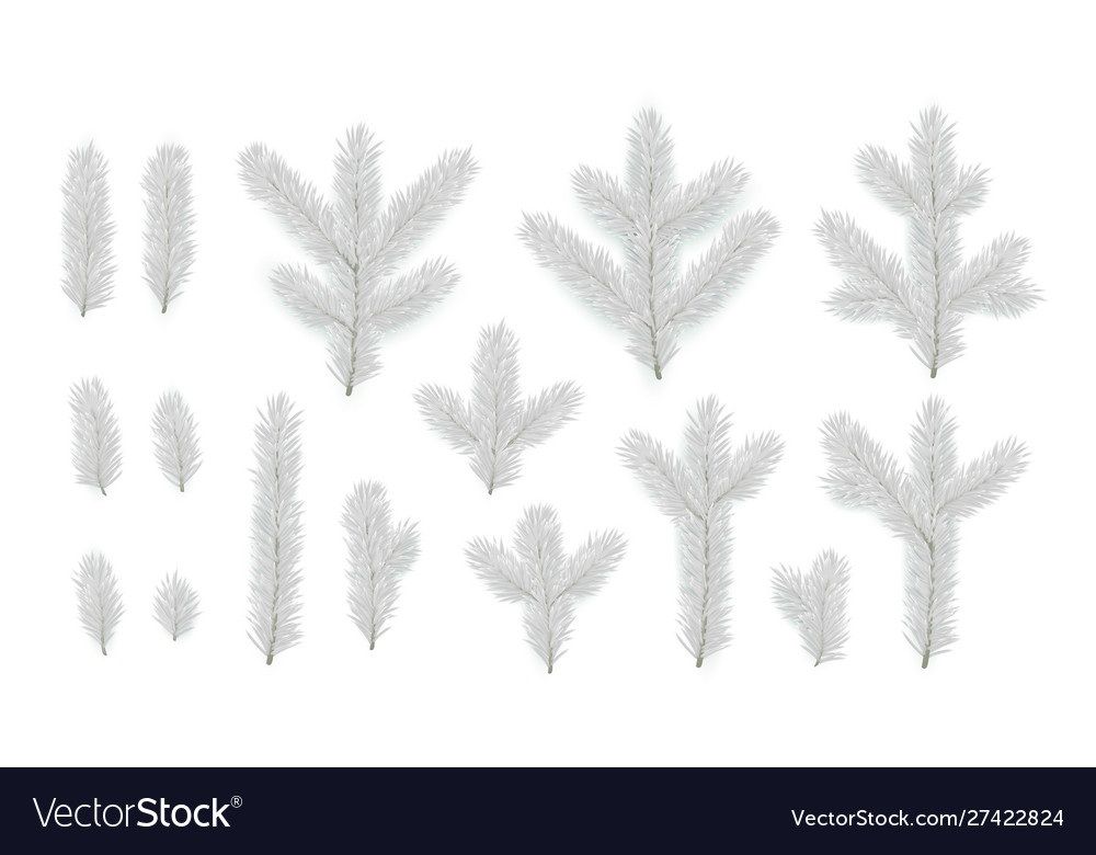 Set pine fir silver branches spruce branches