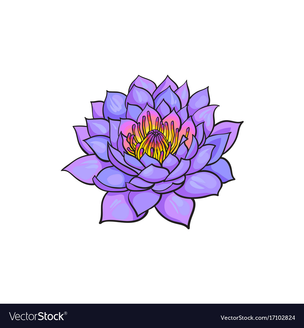 Sketch lotus flower blossom blooming royalty free vector sketch lotus flower blossom blooming vector image mightylinksfo