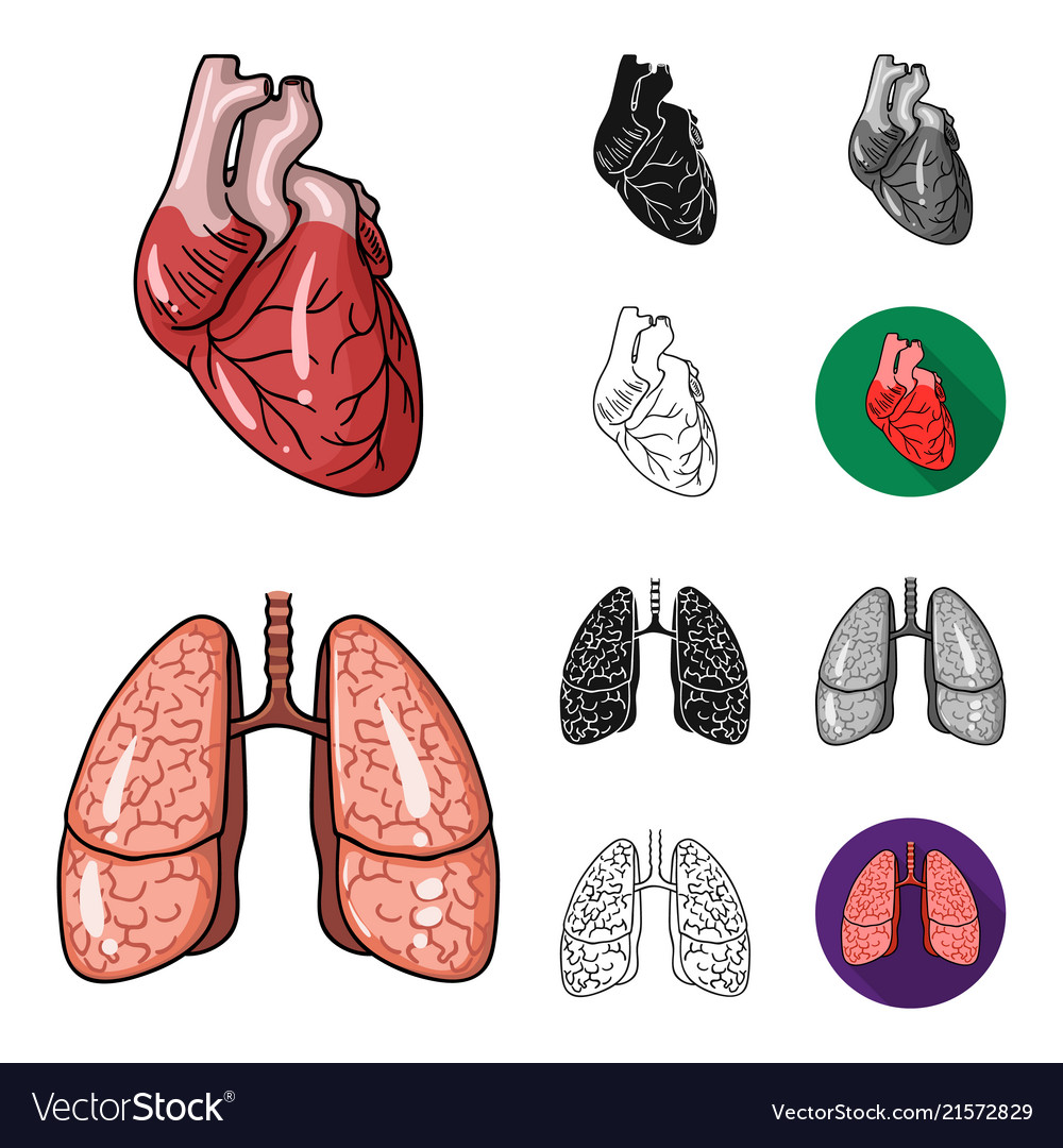 Human Organs Cartoonblackflatmonochromeoutline Vector Image Torso Diagram
