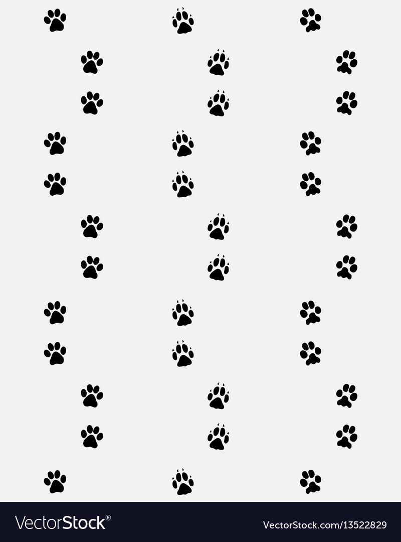 Prints of dog paws