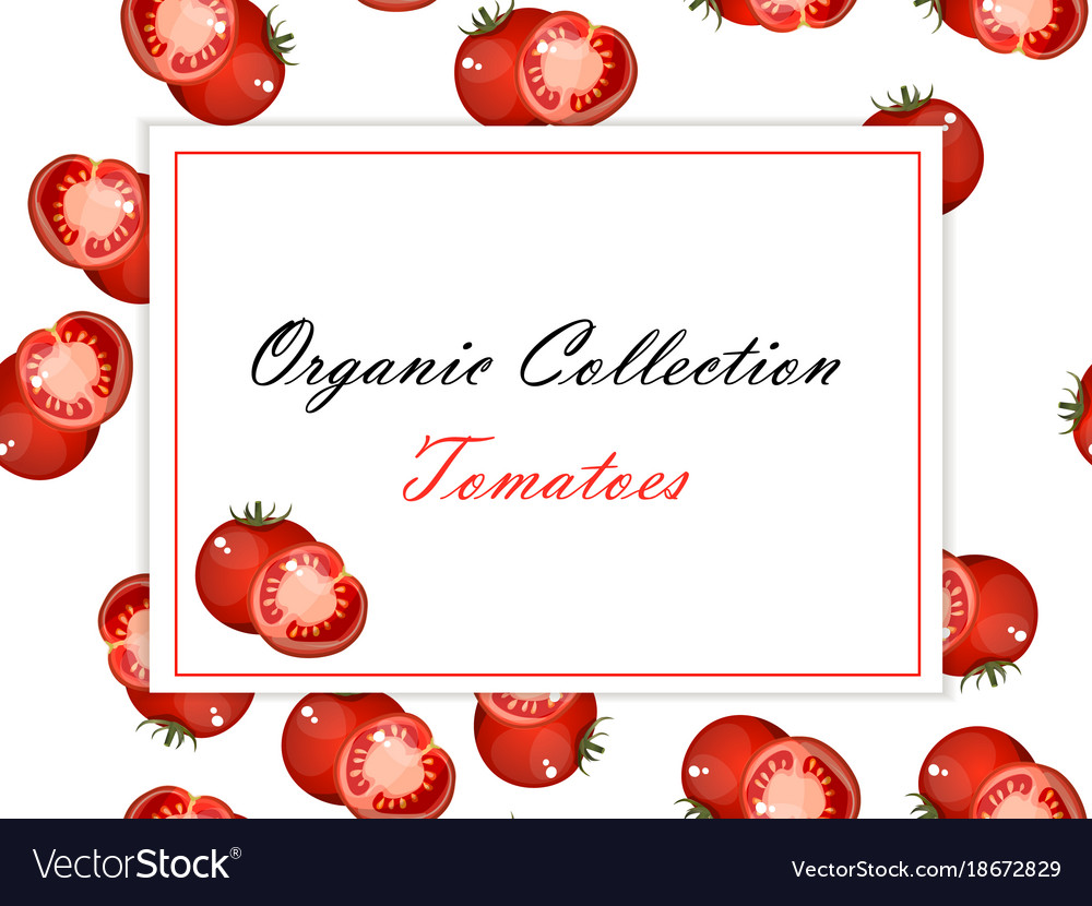 vintage poster template for tomato label vector image