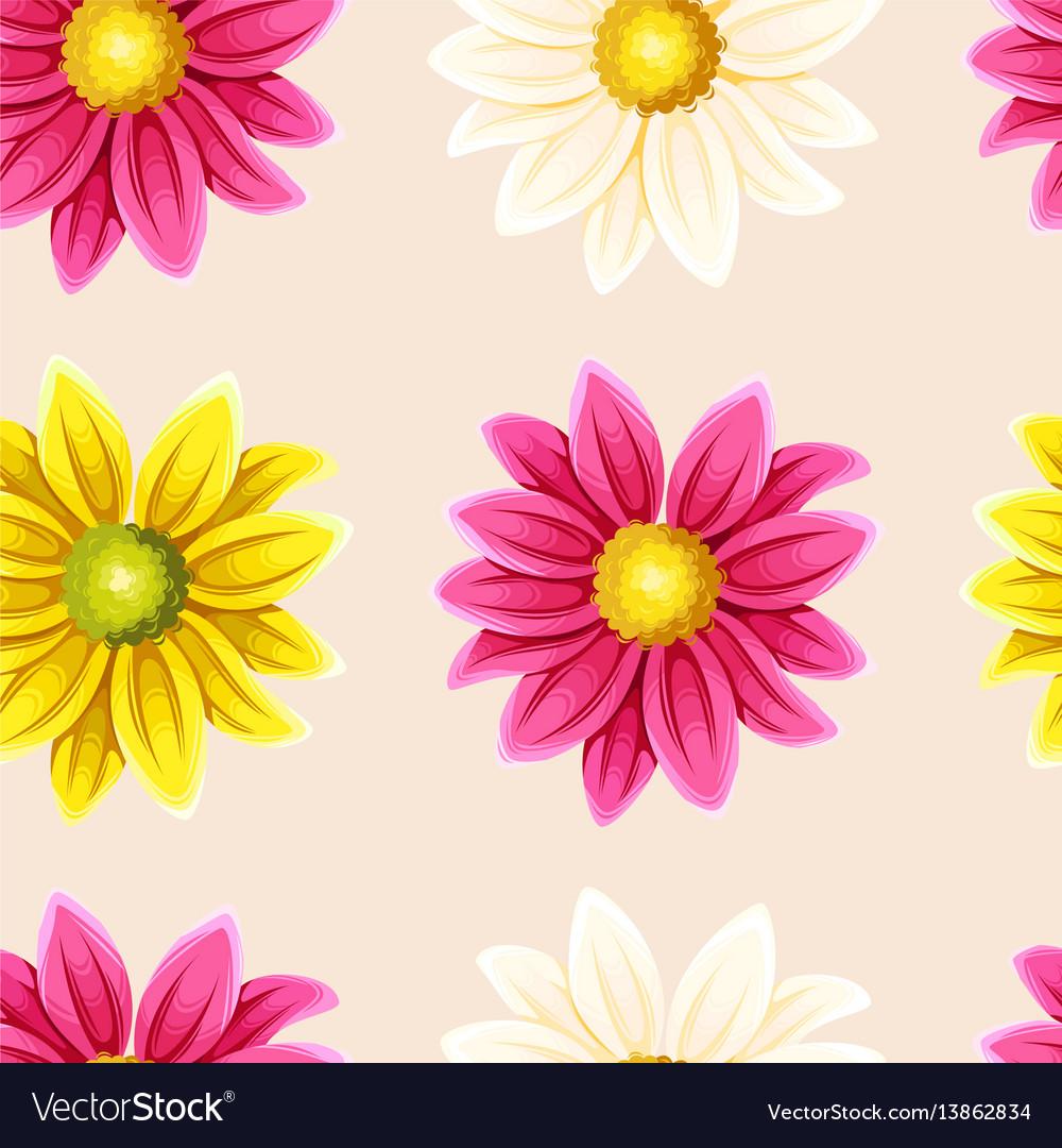 Varicolored chrysanthemums seamless