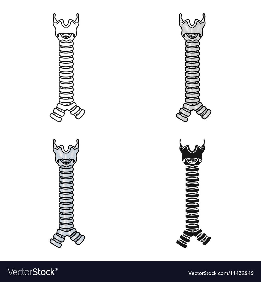 Human Trachea Icon In Cartoon Style Isolated On Vector Image