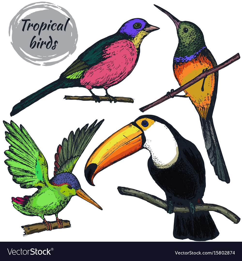Collection sketch exotic tropical birds