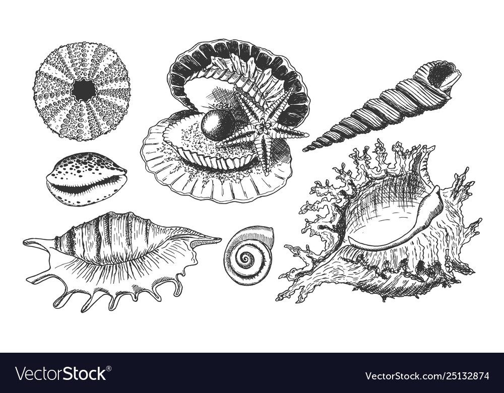 Tropical shells underwater icon set