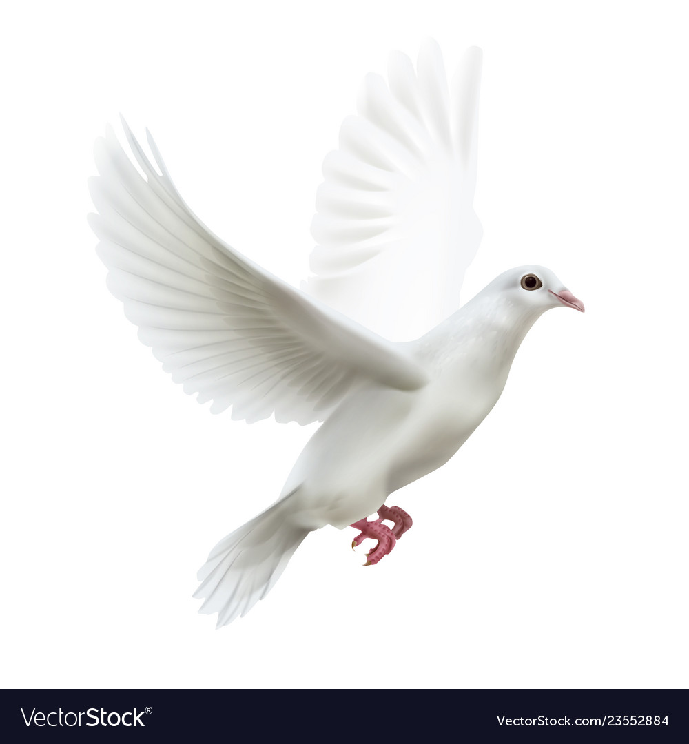 White flying dove