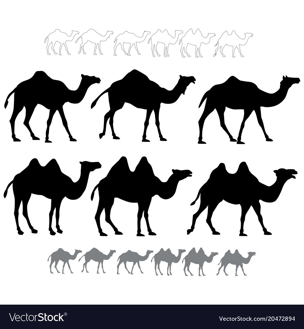 Set of black silhouettes camels vector image