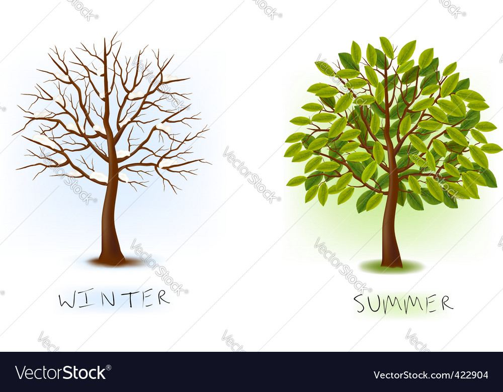 Winter and summer trees