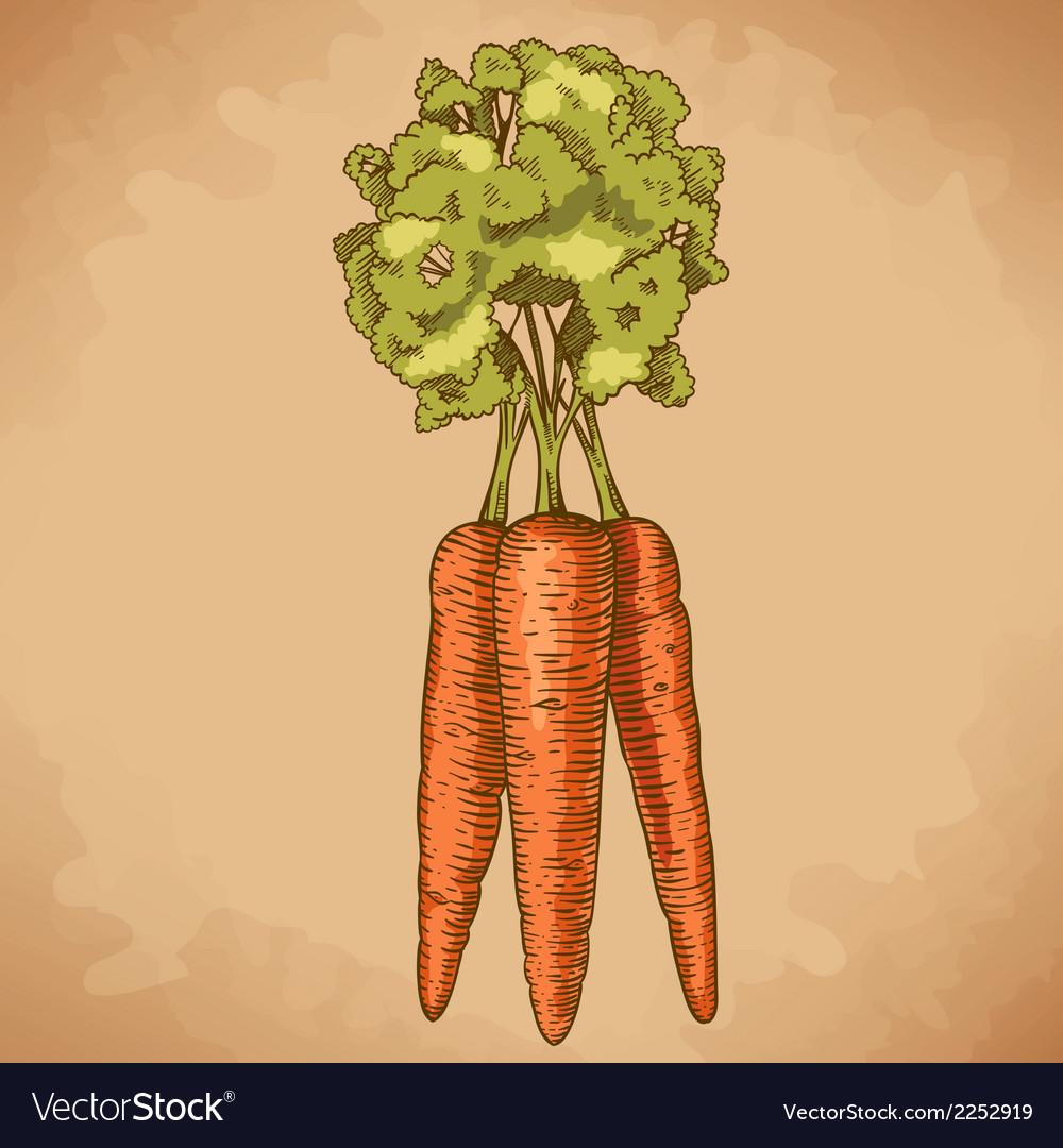 Engraving carrot retro