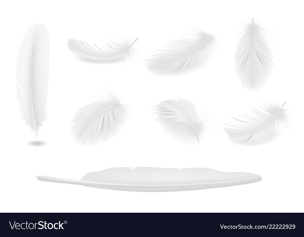 White feathers set