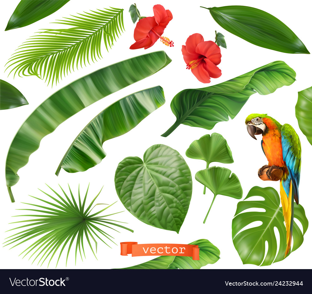 Botany set leaves and flowers tropical plants