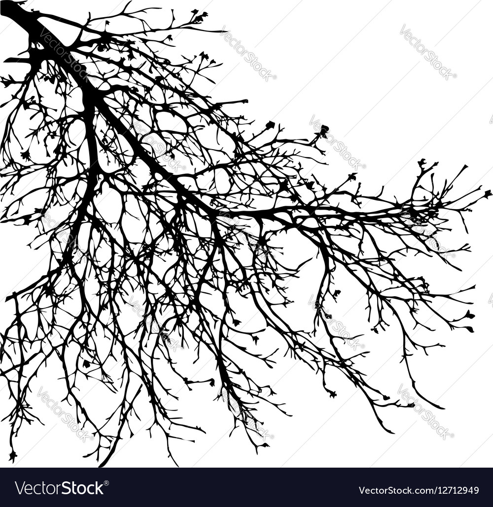 Dry tree dead tree with beautiful branch silhouet