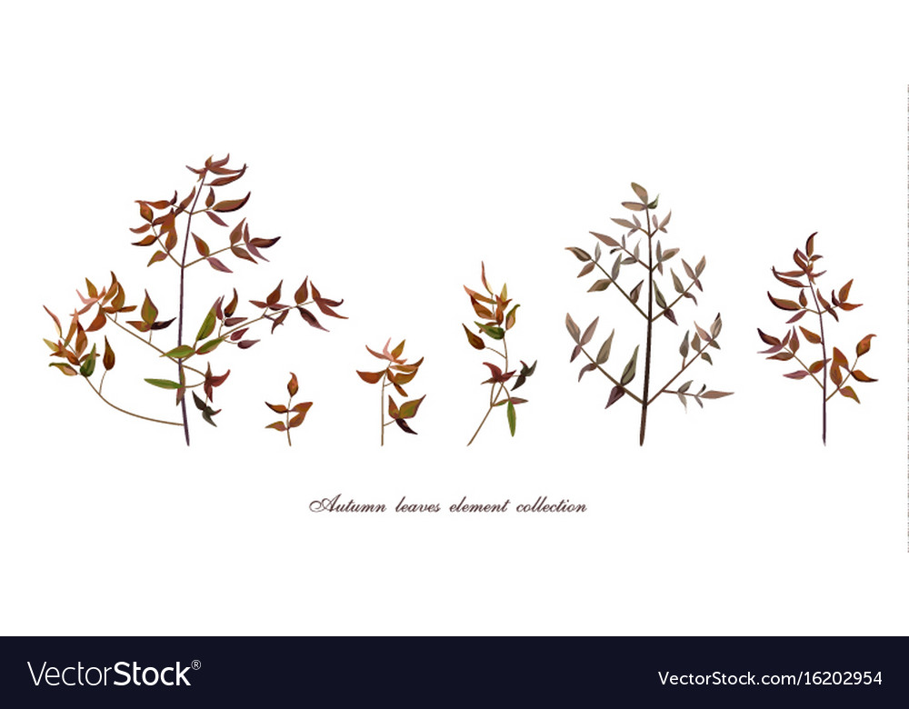 Autumn leaf tree branches designer art different vector image