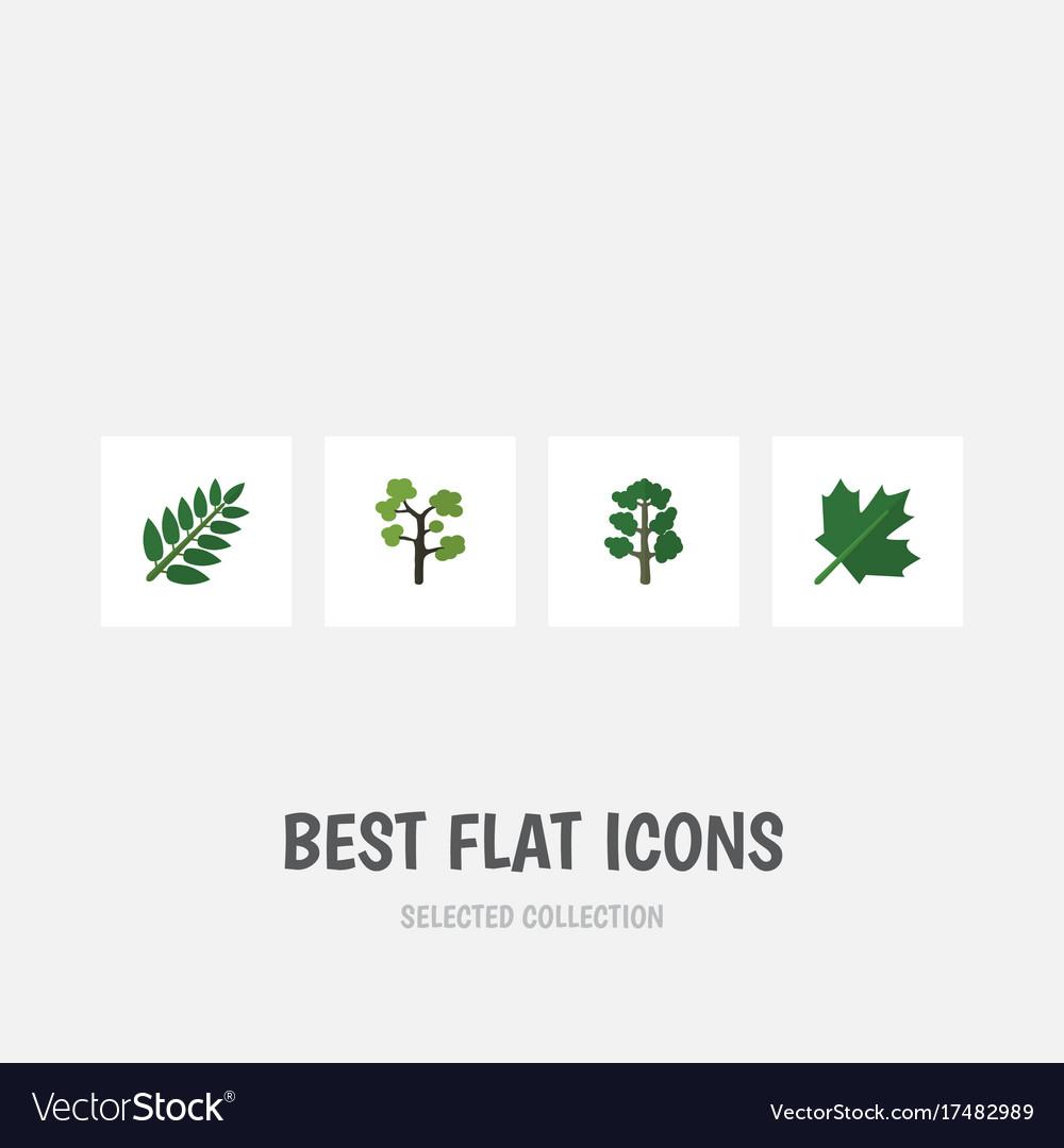 Flat icon bio set of forest acacia leaf oaken