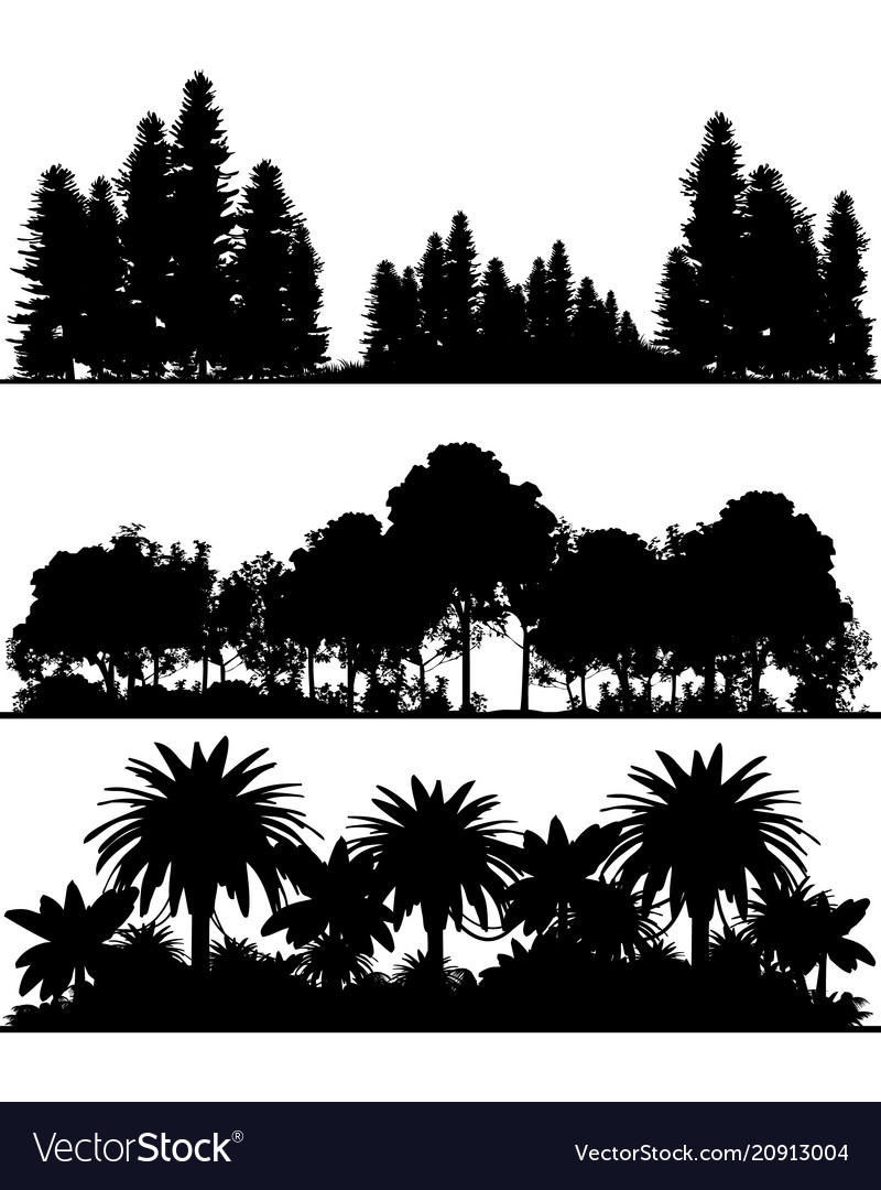 Silhouettes of the forest