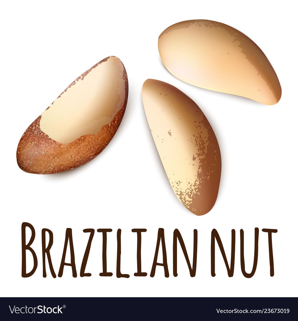 Brazilian nut icon realistic style