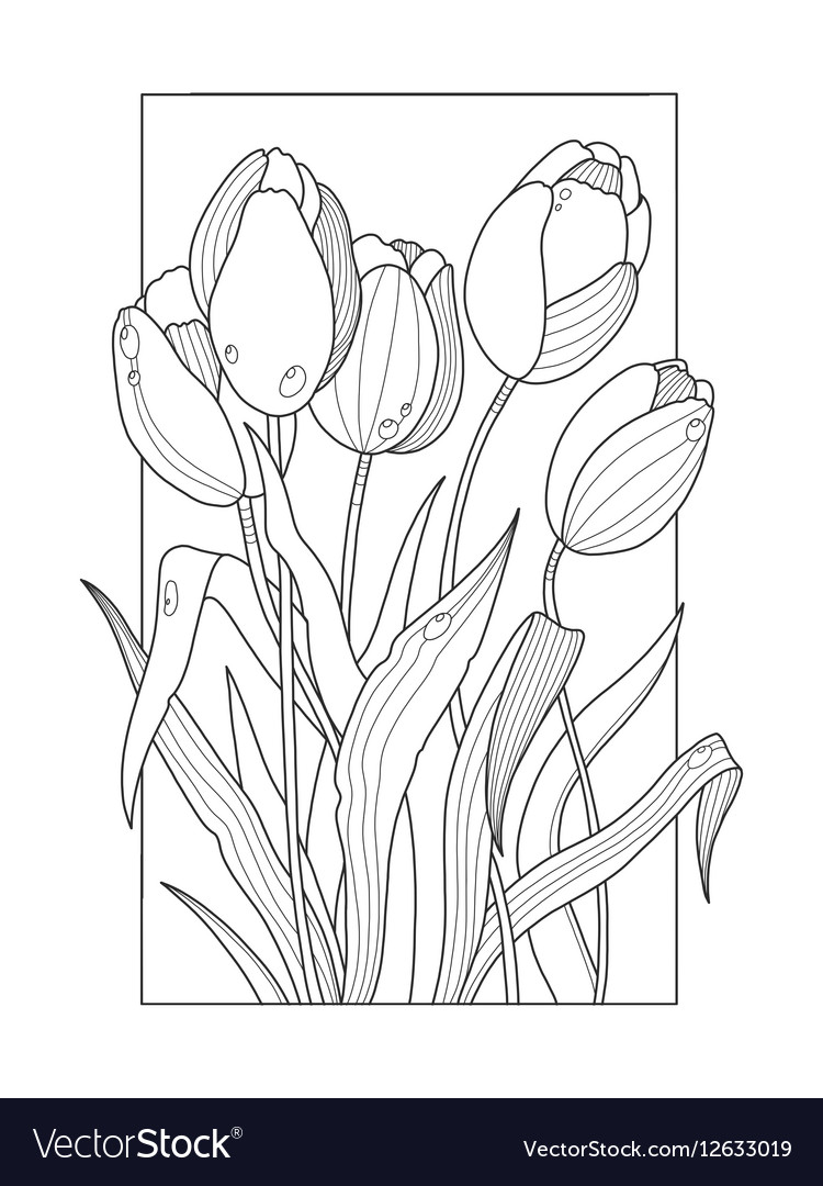 Tulip Flowers Coloring Book Royalty Free Vector Image