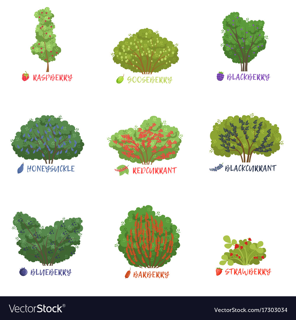 Diffe Garden Berry Shrubs Sorts With Names Set