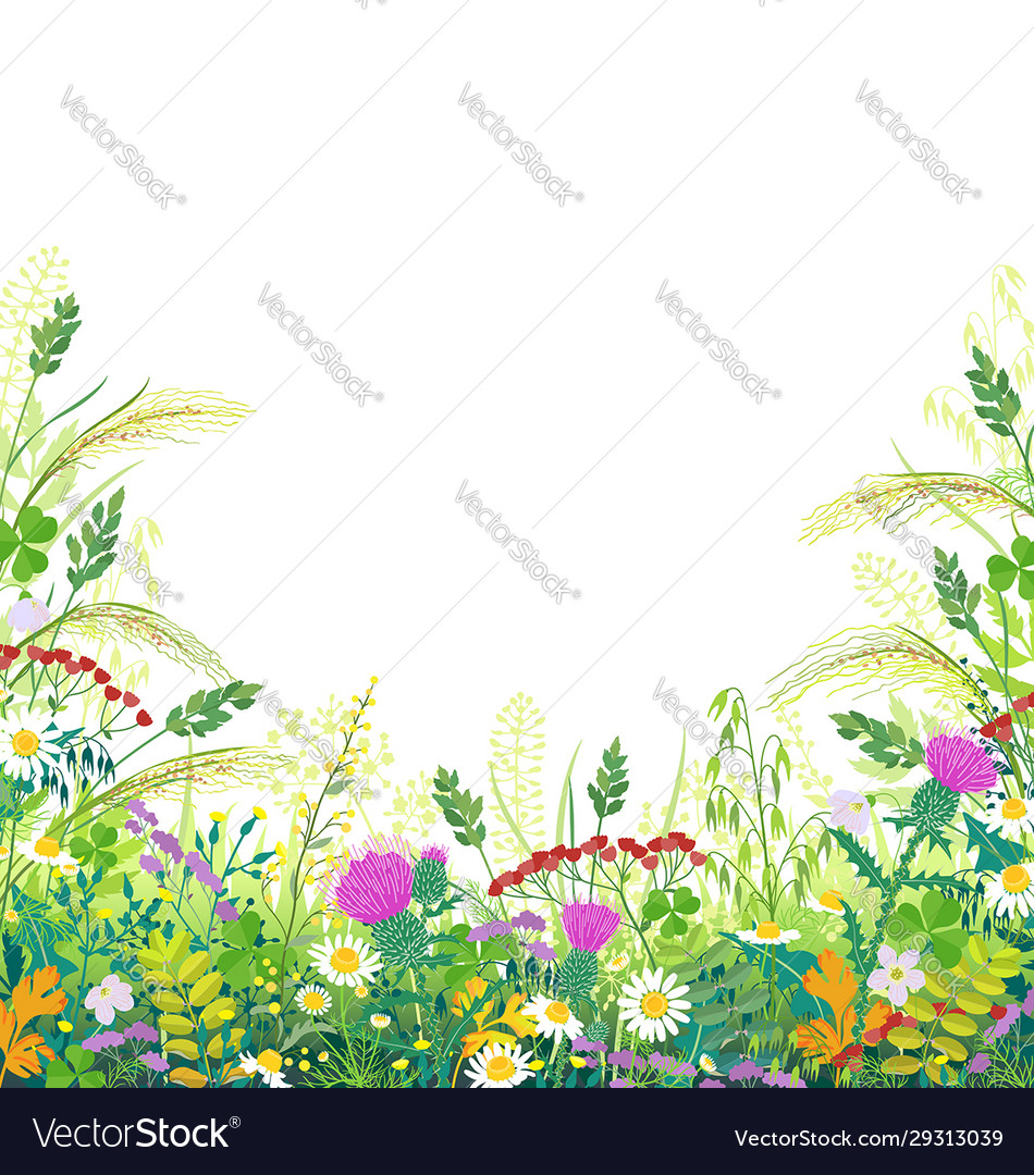 Colorful frame with summer meadow plants