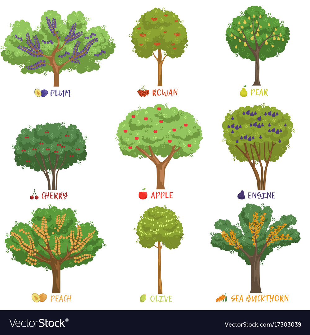 Different fruit trees sorts with names set garden