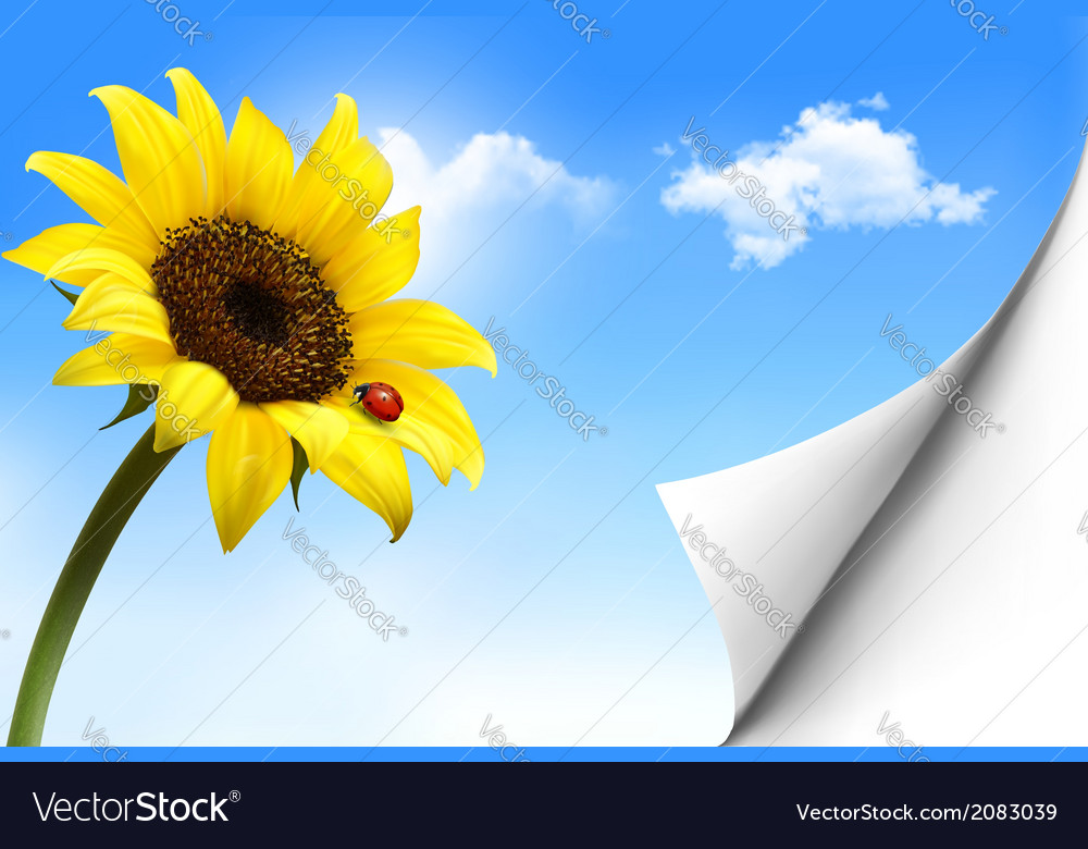 Nature background with yellow sunflower