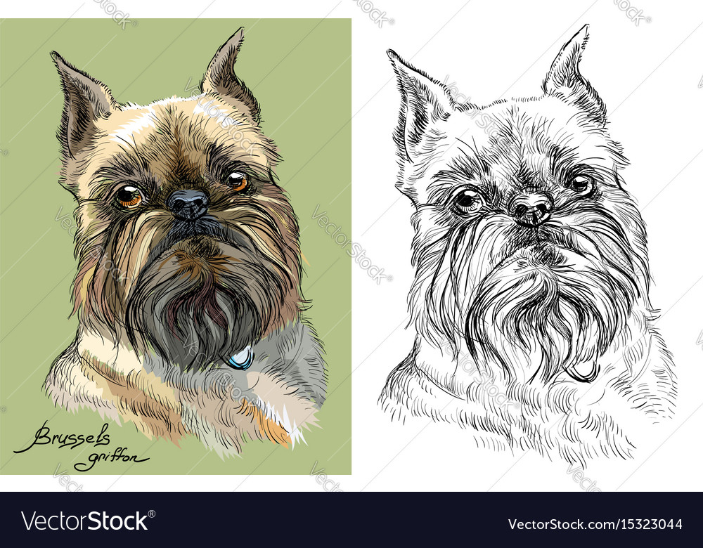 Colored and black and white brussels griffon dog vector image