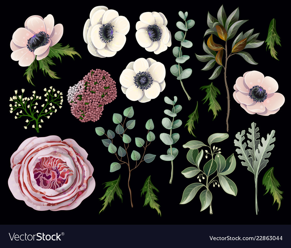 Set with botanical elements such us anemone