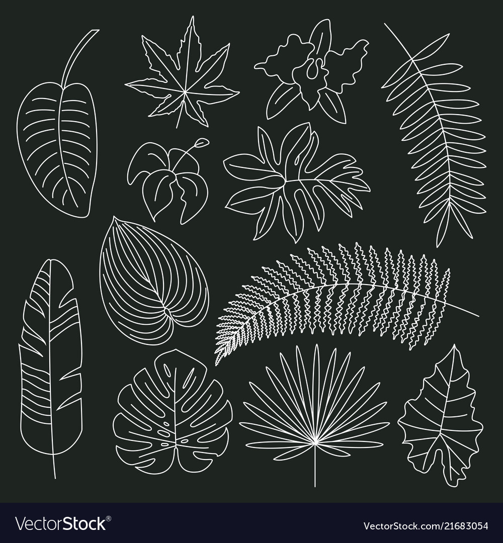 Tropical Leaves Floral Tropical Elements Outline Vector Image Floral, floral pattern, tropical, outline, plant, round, philodendron, leaf, circle, jungle, exotic, monstera, leaves, contour, plants, circular tropical leaf outlines design. vectorstock