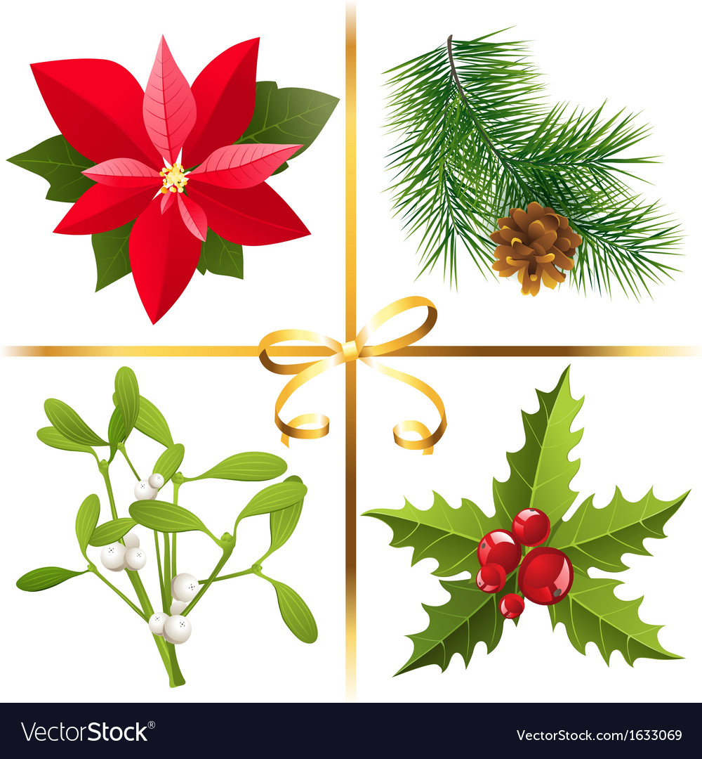 Christmas Plants Royalty Free Vector Image Vectorstock