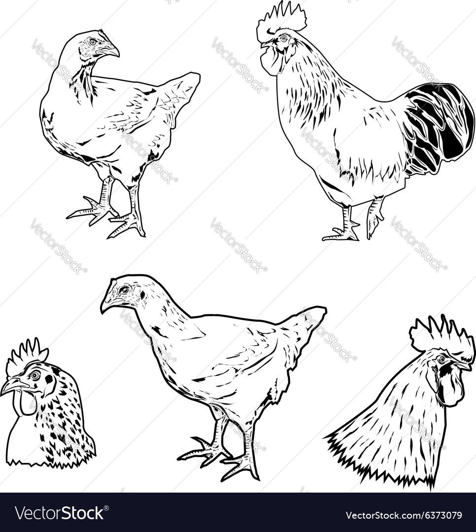 Chicken siluet