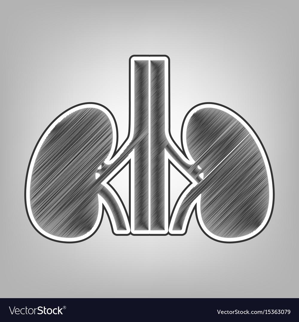 Human Anatomy Kidneys Sign Pencil Sketch Vector Image