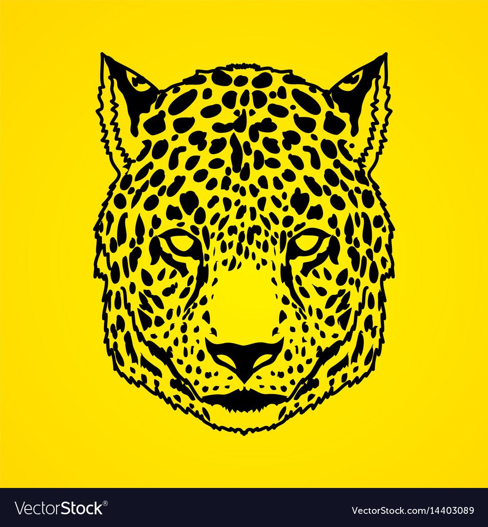 Cheetah face tiger head panthera front view face