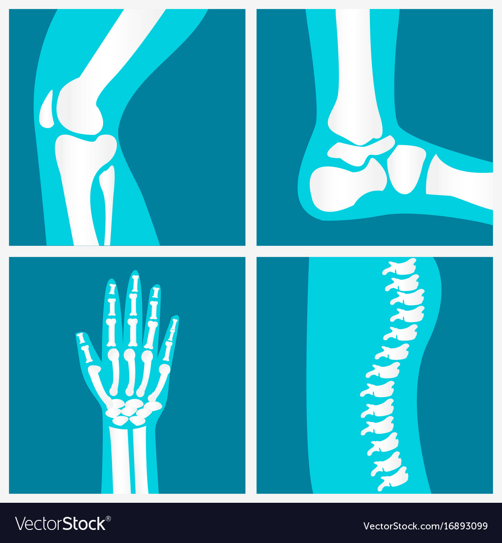 Set of human joints vector image