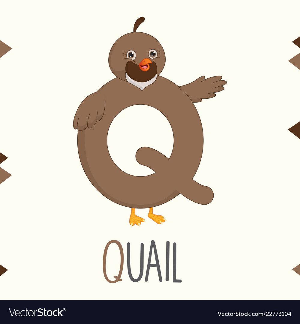 Alphabet letter q and quail