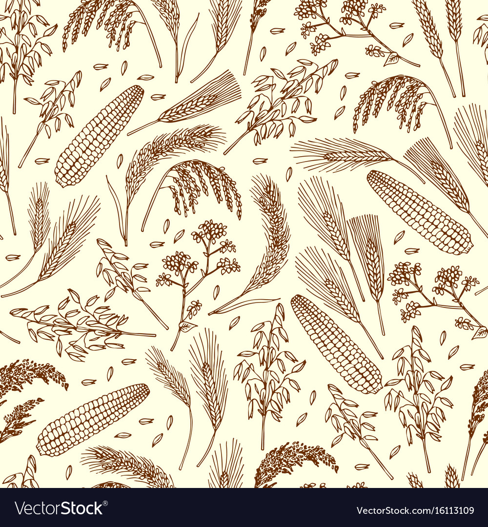 Seamless pattern of organic foods cereals rice vector image