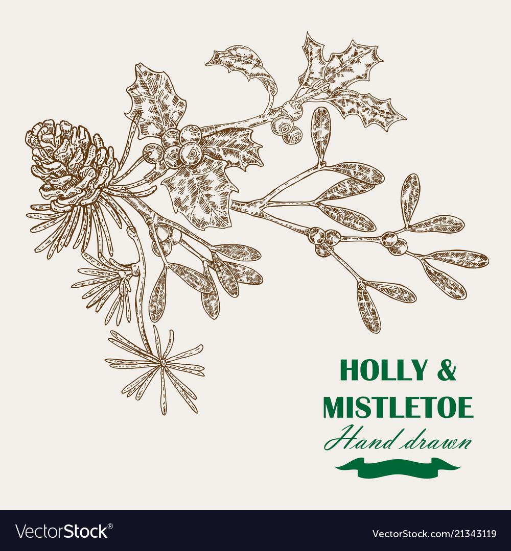 Hand drawn christmas plants mistletoe and holly