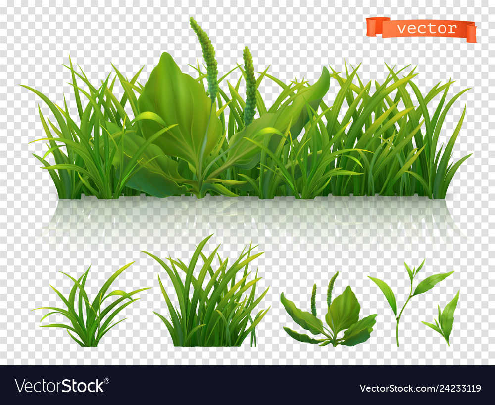 Spring green grass 3d realistic icon set