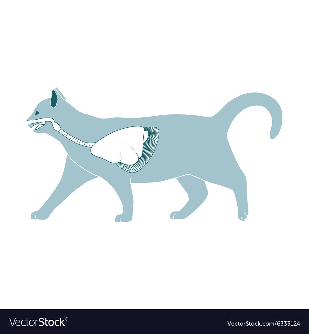 Система кошки картинки