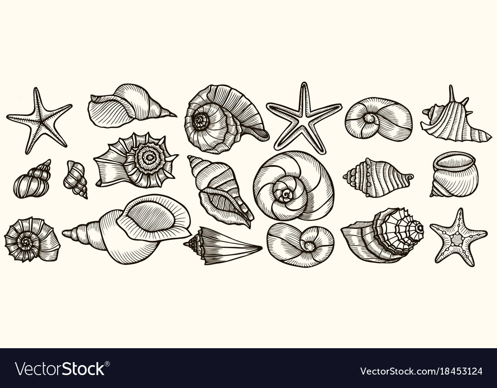 Seashells set