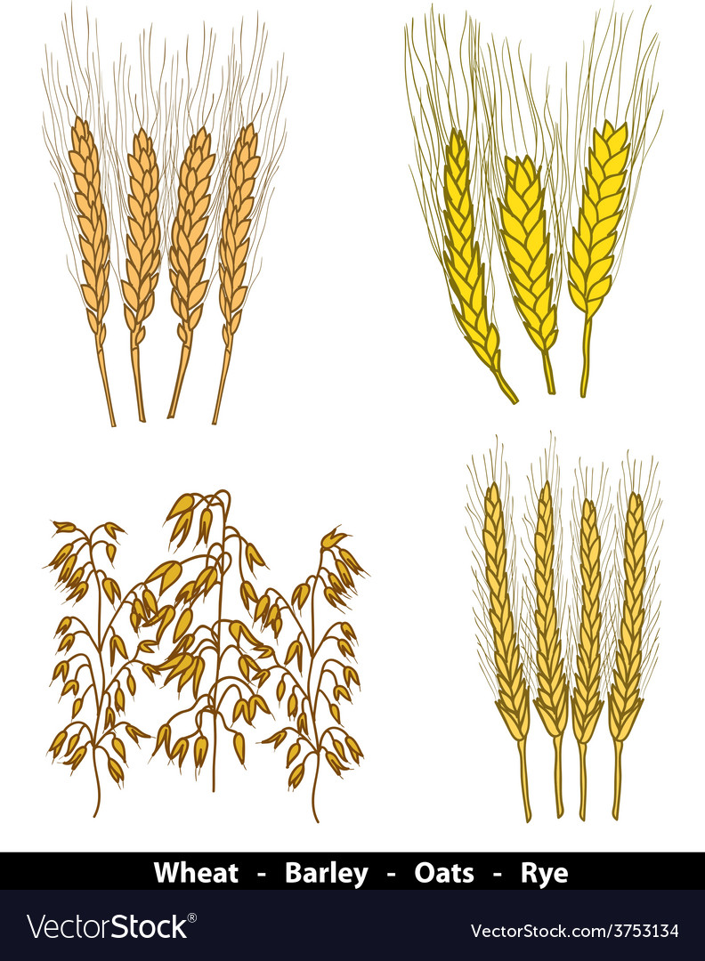 Cereals vector image