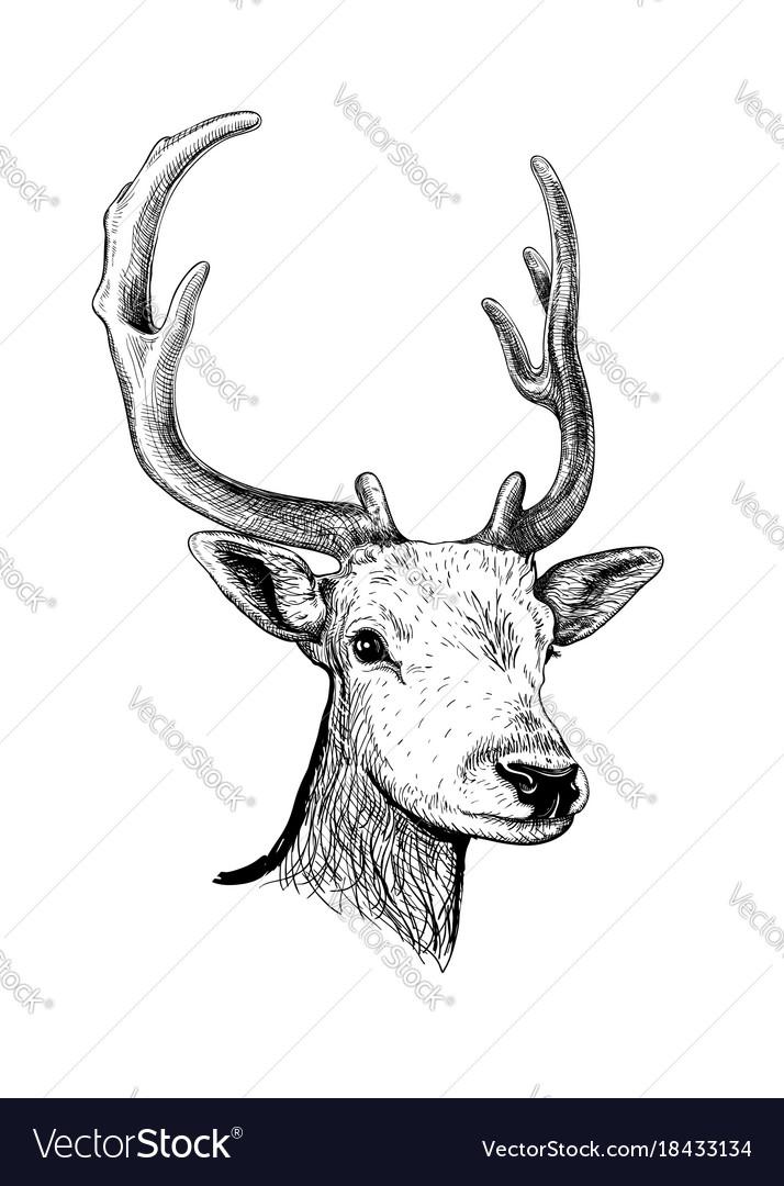 Deer hand drawn sketch