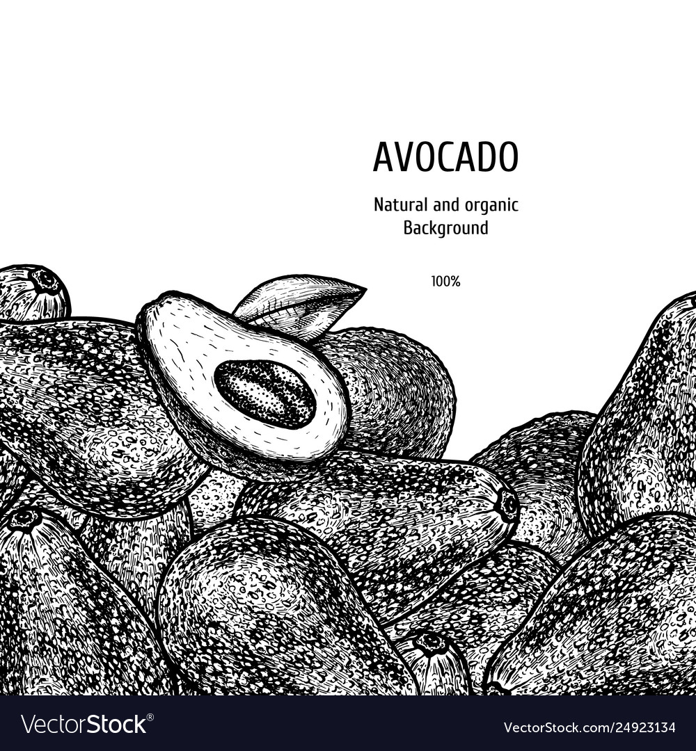 Hand drawn background with avocado vintage