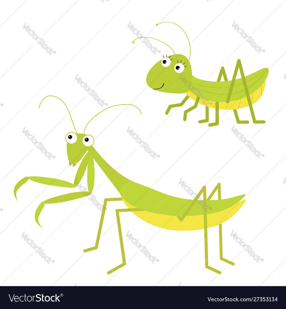 Mantis grasshopper icon set cute cartoon kawaii