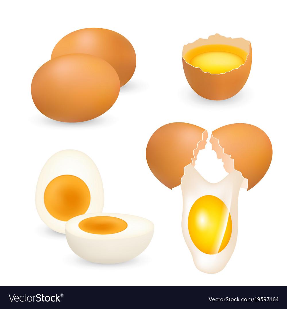 Chicken eggs set realistic