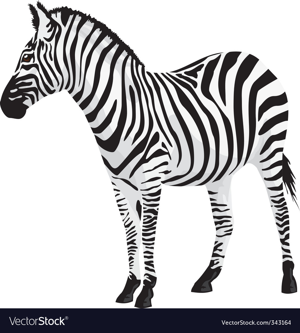 zebra vector illustration royalty free vector image rh vectorstock com zebra vector tileable zebra victor vasarely medium