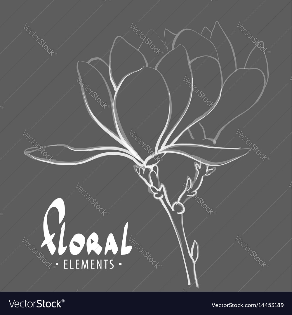 A gentle outline of a flower vector image