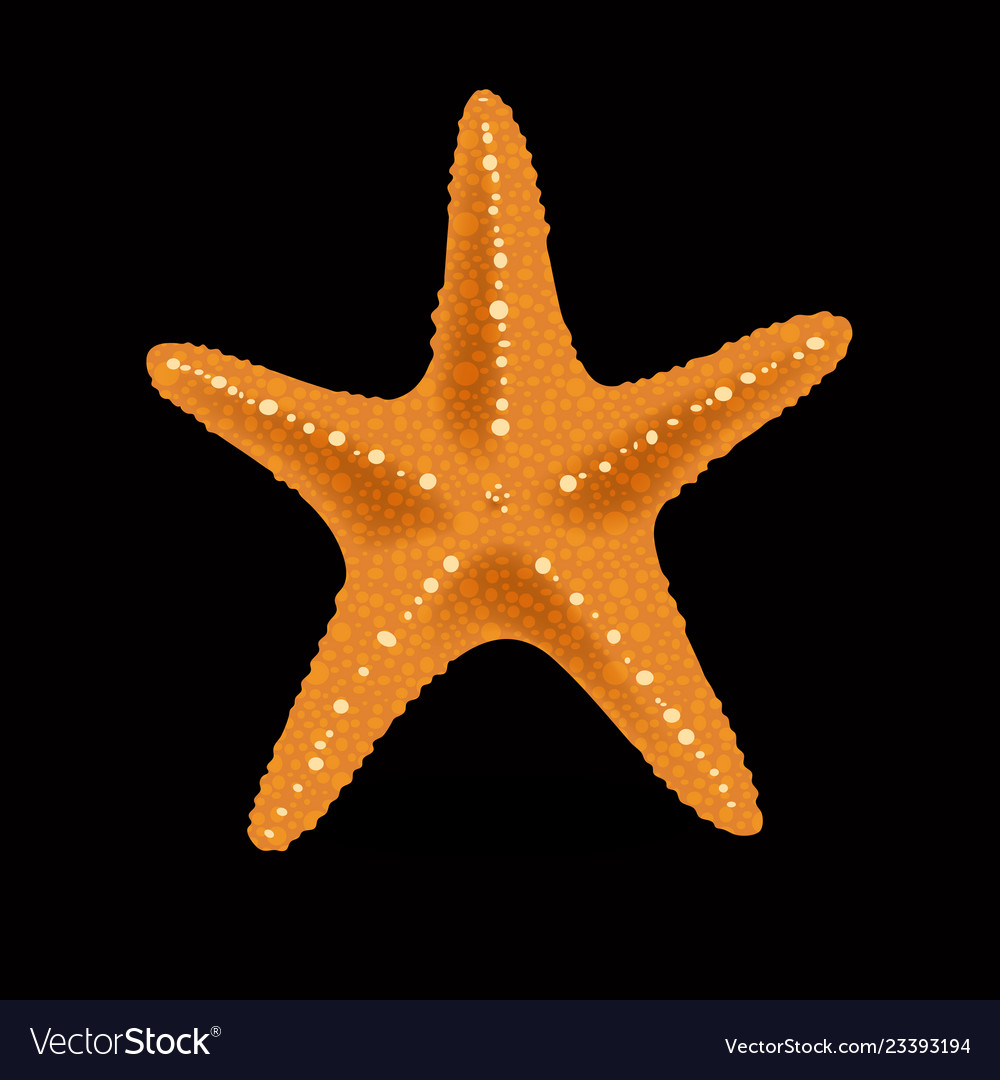 Realistic colorful starfish on black background