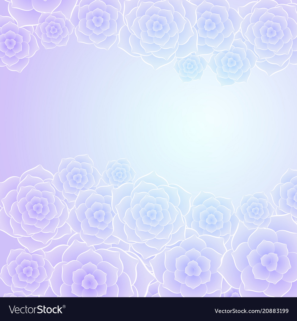 Beautiful purple blue rose flower background