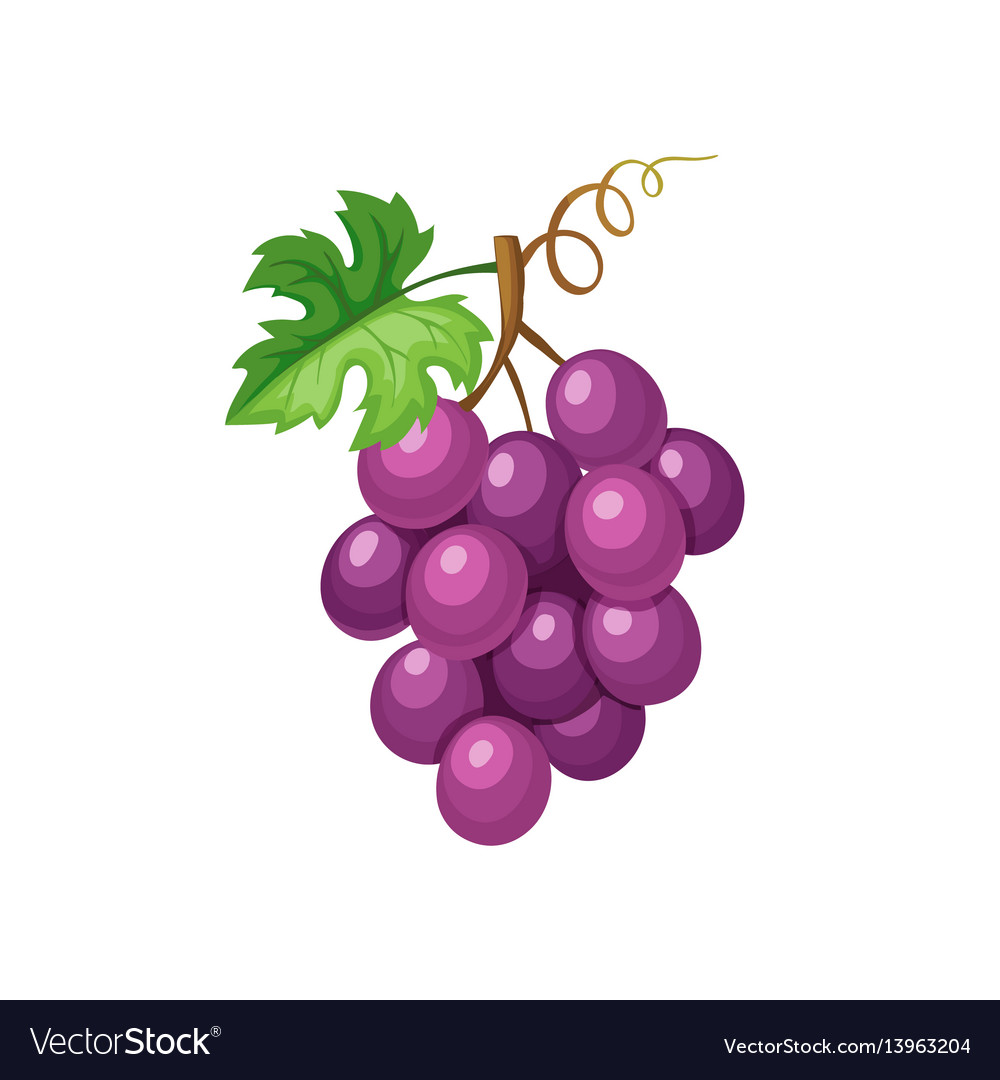 Violet grape icon