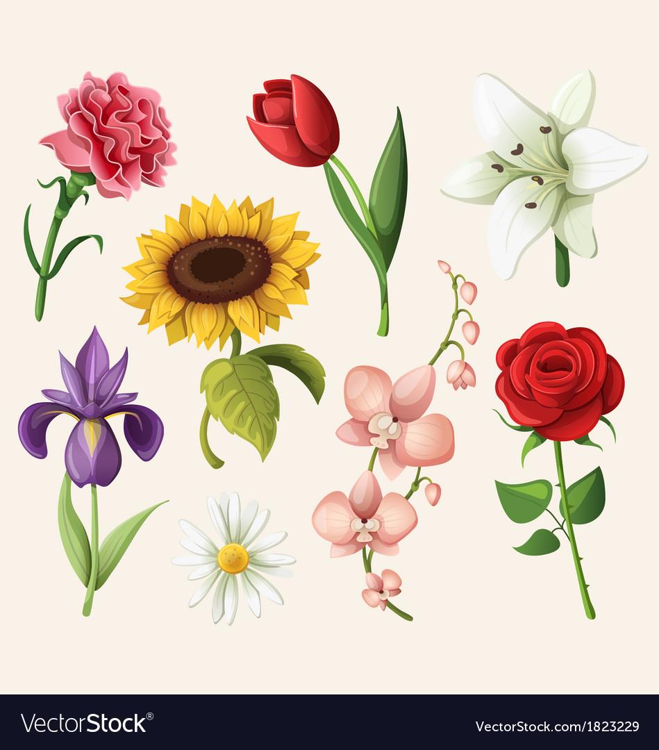 Set romantic summer flowers